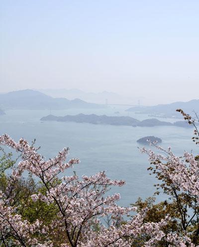 筆影山の桜